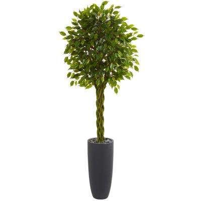Indoor/Outdoor 6.5 ft. Braided Ficus Artificial Tree in Cylinder Planter UV Resistant