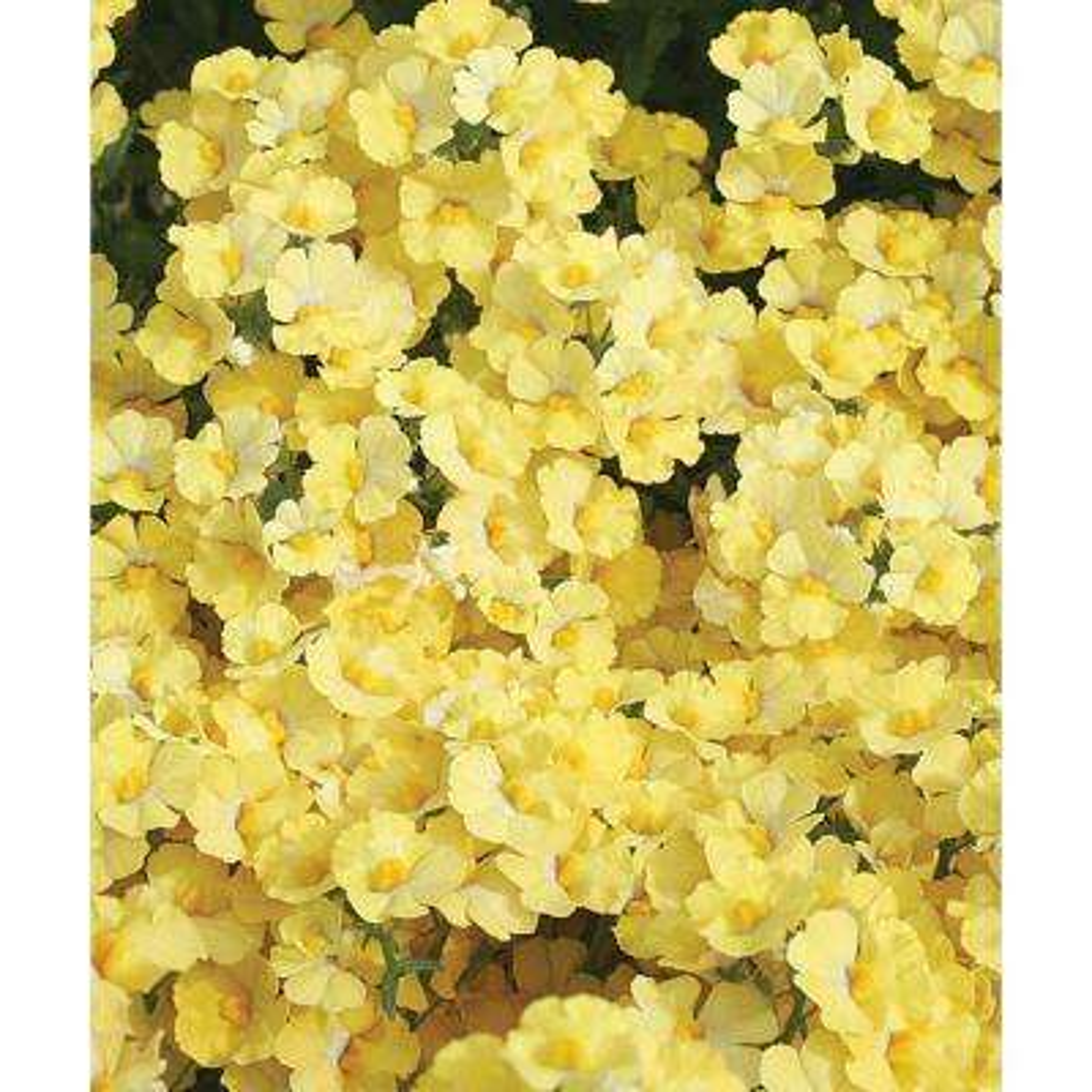 Yellow annuals garden plants flowers the home depot sunsatia lemon nemesia live plant yellow flowers 425 in grande mightylinksfo