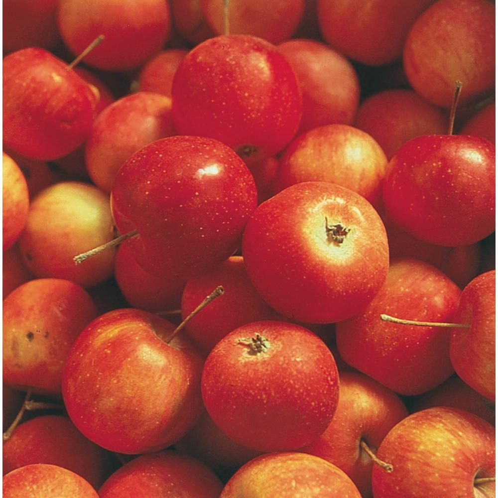 Types Of Crabapple Fruit