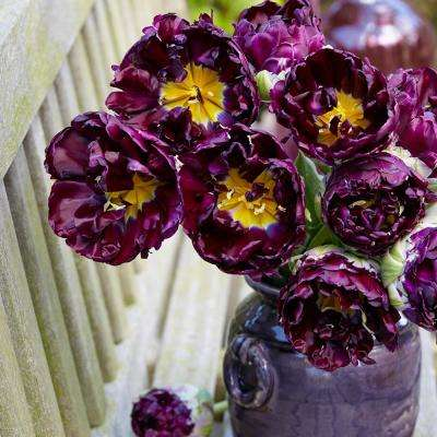 Tulips Bulbs Wow (Set of 8)