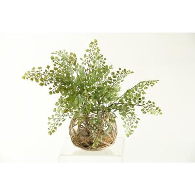Indoor Flat Iron Fern in Glass Bowl with Seagrass Netting