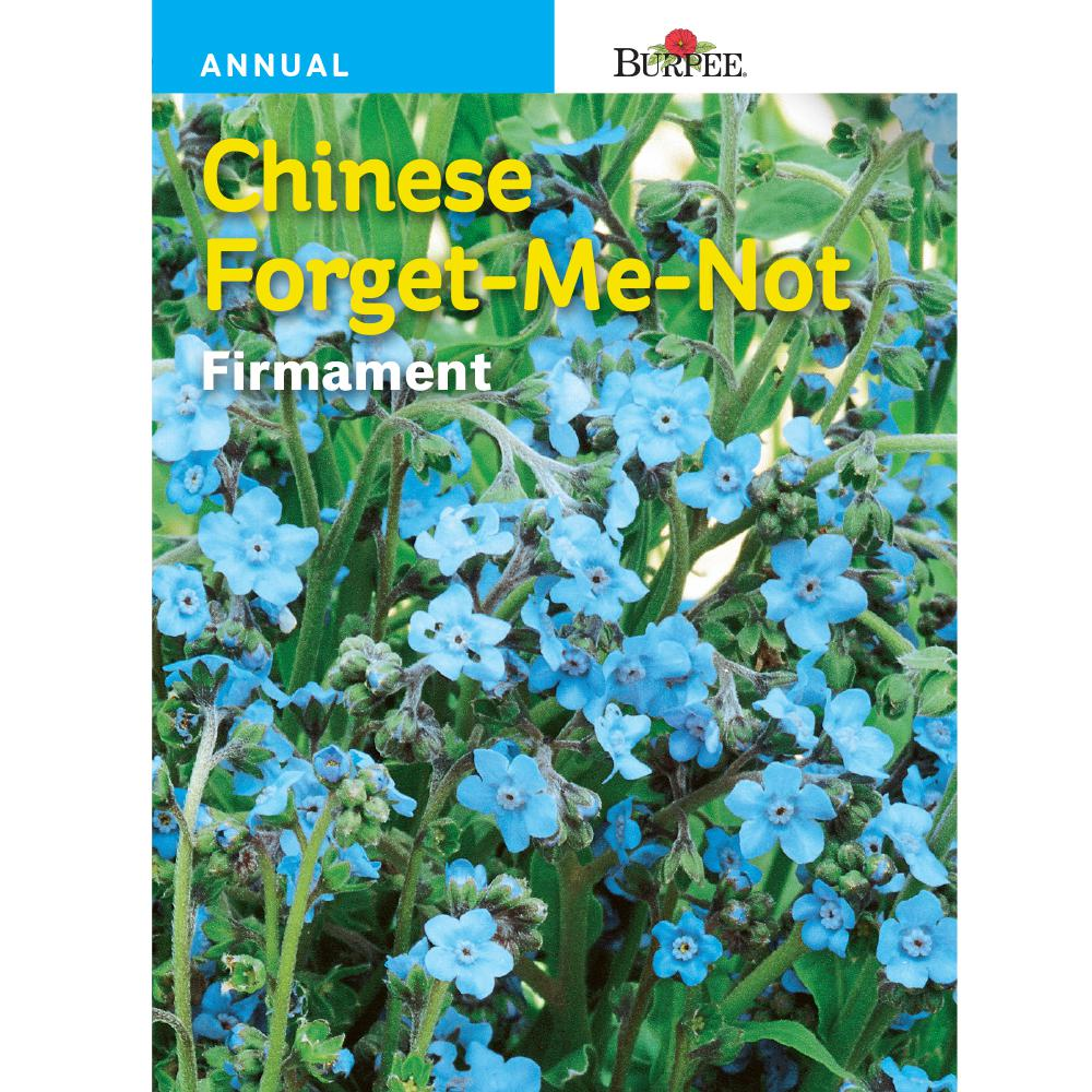 Chinese Forget-Me-Not Firmament Flower Seed