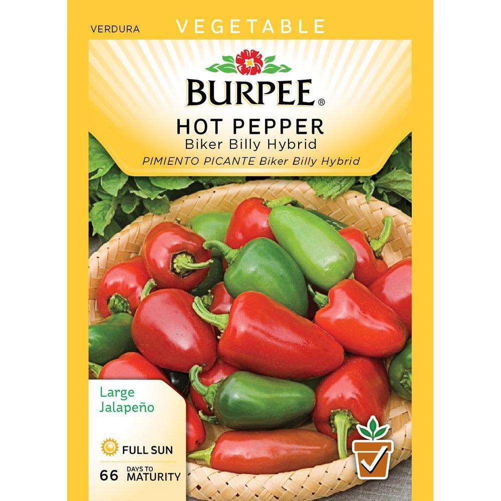 Burpee Pepper Hot Biker Billy Hybrid Seed