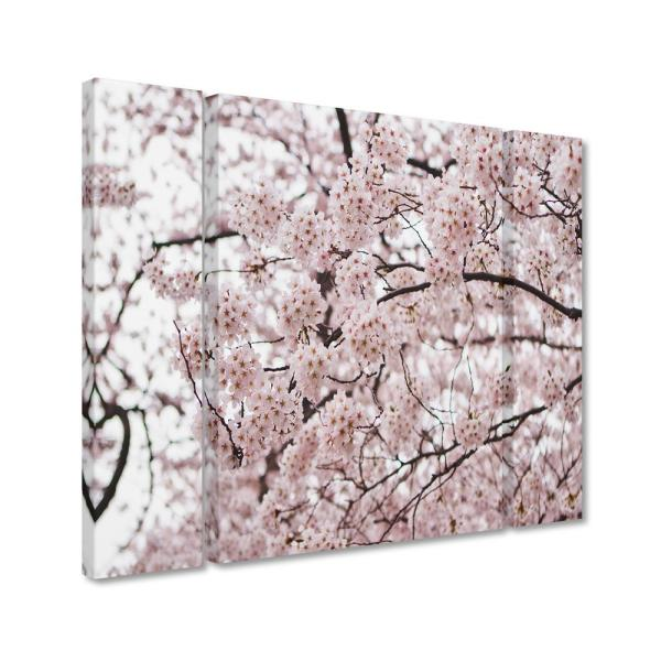 Trademark Fine Art 30 In X 41 In Cherry Blossoms By Ariane Moshayedi Printed Canvas Wall Art Am0121 3pc Set Lg The Home Depot