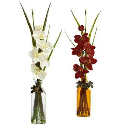 Phalaenopsis with Colored Jar (Set of 2)