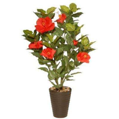22 in. Potted Hibiscus Plant