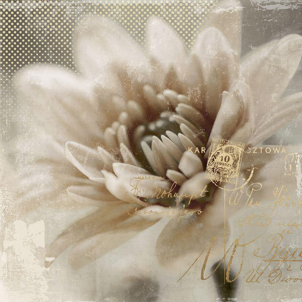 "Yosemite Home Decor 20 in. x 20 in. ""Blooming Softly II"" Printed Contemporary Artwork"