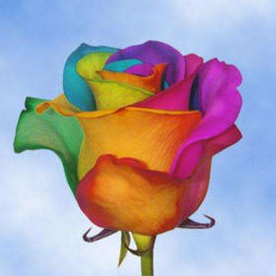 Assorted colors flower bouquets garden plants for How to color roses rainbow