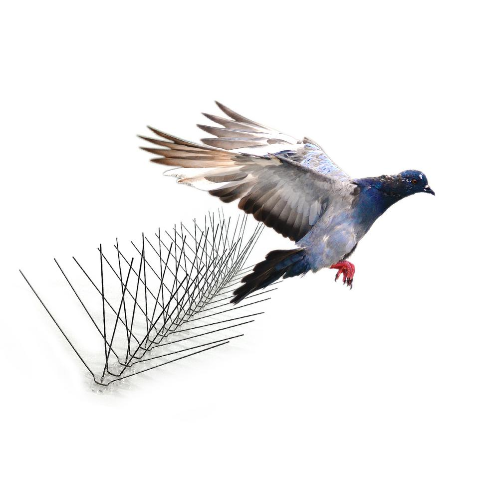 Bird-X 50 ft. Stainless Steel Bird Spikes Pigeons Starling Blackbirds Seagulls 6 in. Coverage