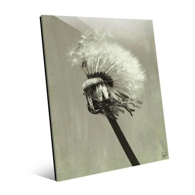 """20 in. x 24 in. """"Dandelion Seeds in Olive"""" Acrylic Wall Art Print"""