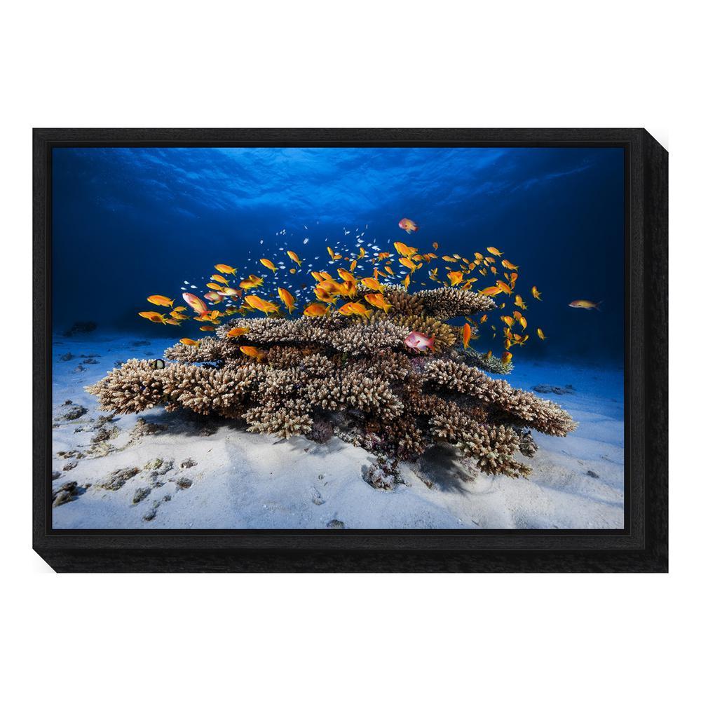 Amanti Art Marine Life By Barathieu Gabriel Framed Canvas