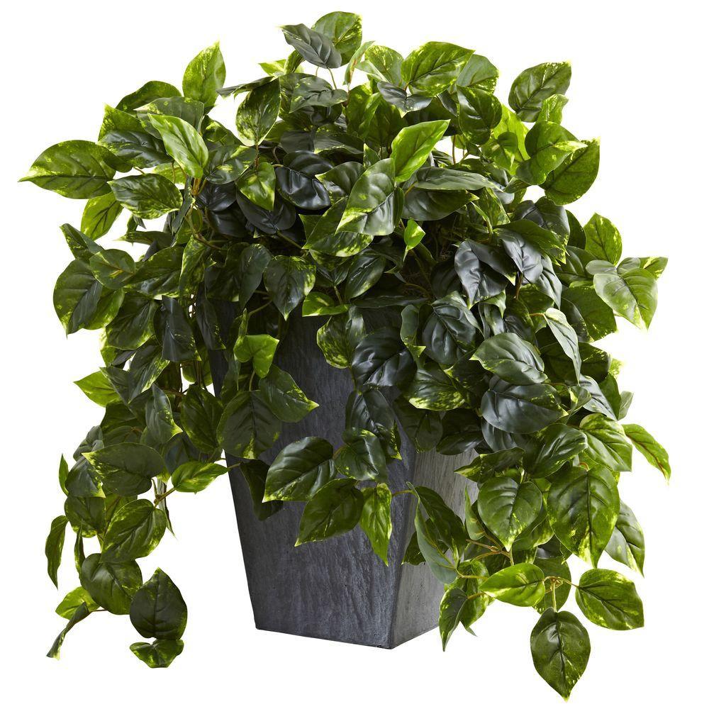 UV Resistant Indoor/Outdoor Hanging Pothos with Slate Planter