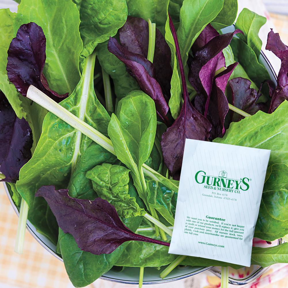 Gurney's Superfood Salad Mix Seed (100-Pack)