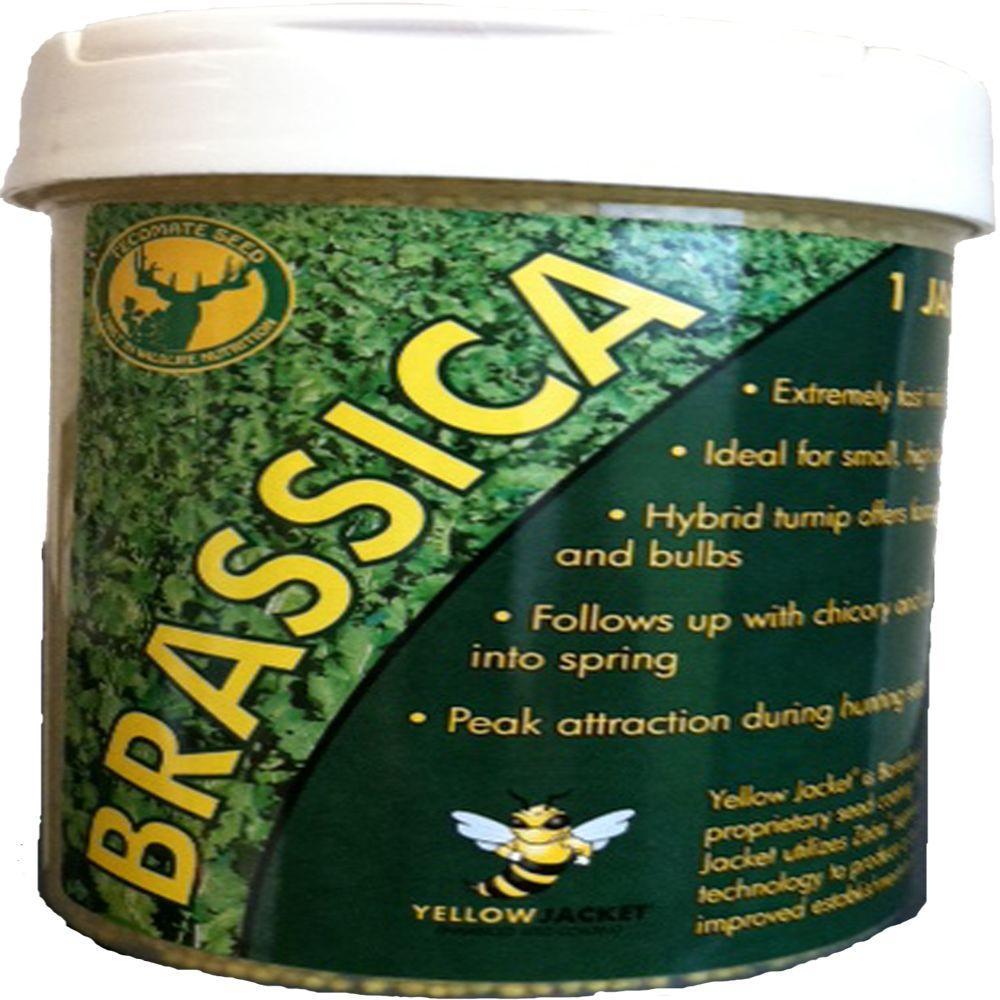 Tecomate 1 lb. Brassica Pounder Professional Wildlife Seed