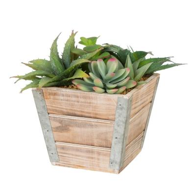 7.5 in. H Succulent Plants in Wooden Box