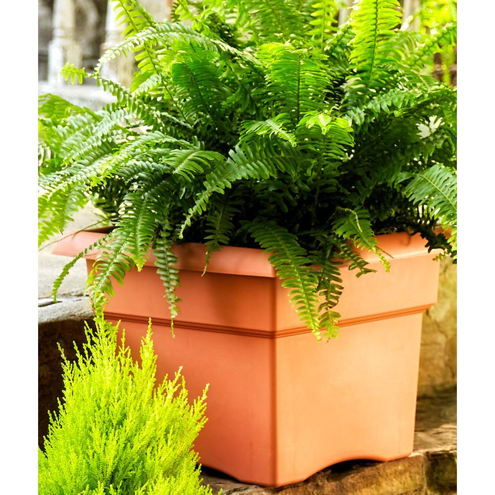 Bloem 14 x 11.25 Terra Cotta Veranda Plastic Square Deck Box Planter