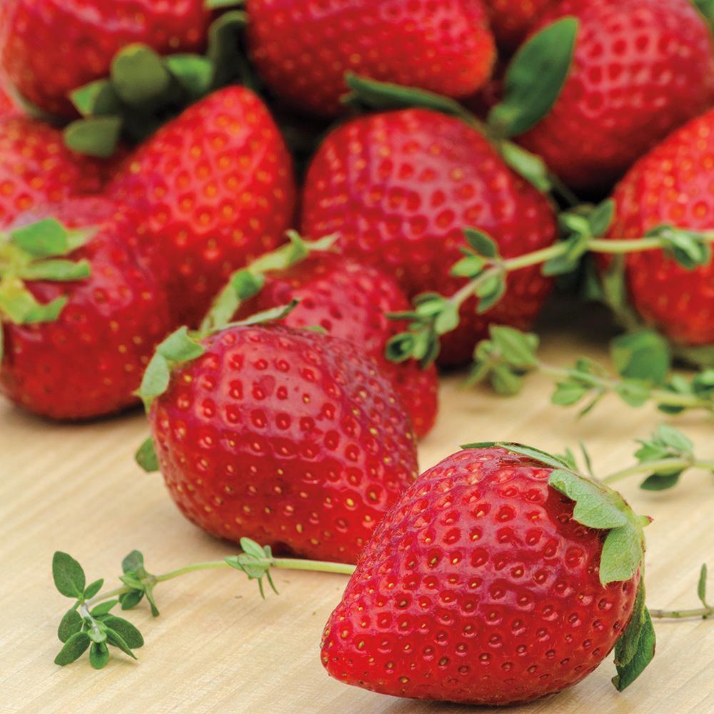 Ozark Beauty Strawberry Plants (10-Pack)