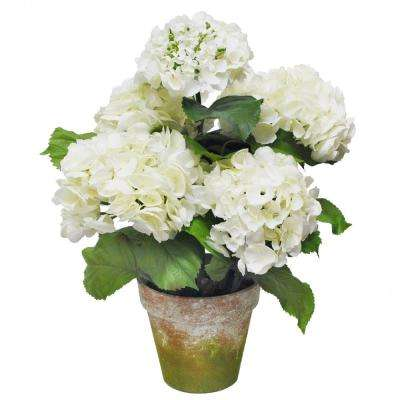 22 in. Potted Hydrangea
