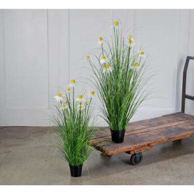 White Daisy in Wild Grass (Set of 2)