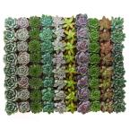 2 in. Rosette Succulent (Collection of 256)