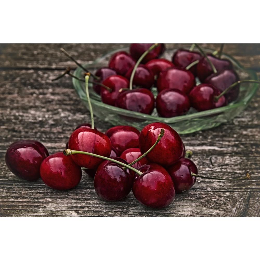 Online Orchards Dwarf Bing Cherry Tree Bare Root Ftch002 The