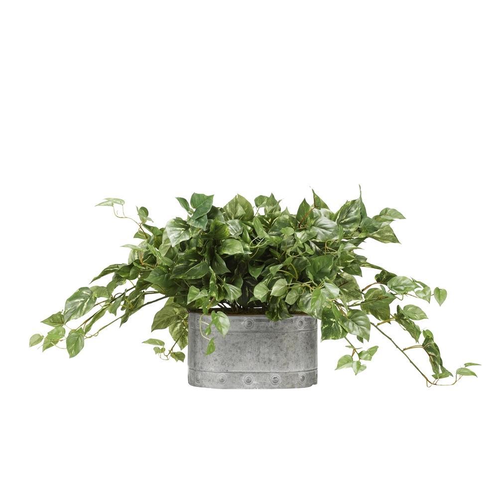 Indoor 28 in. Pothos Ivy in Oval Metal Planter