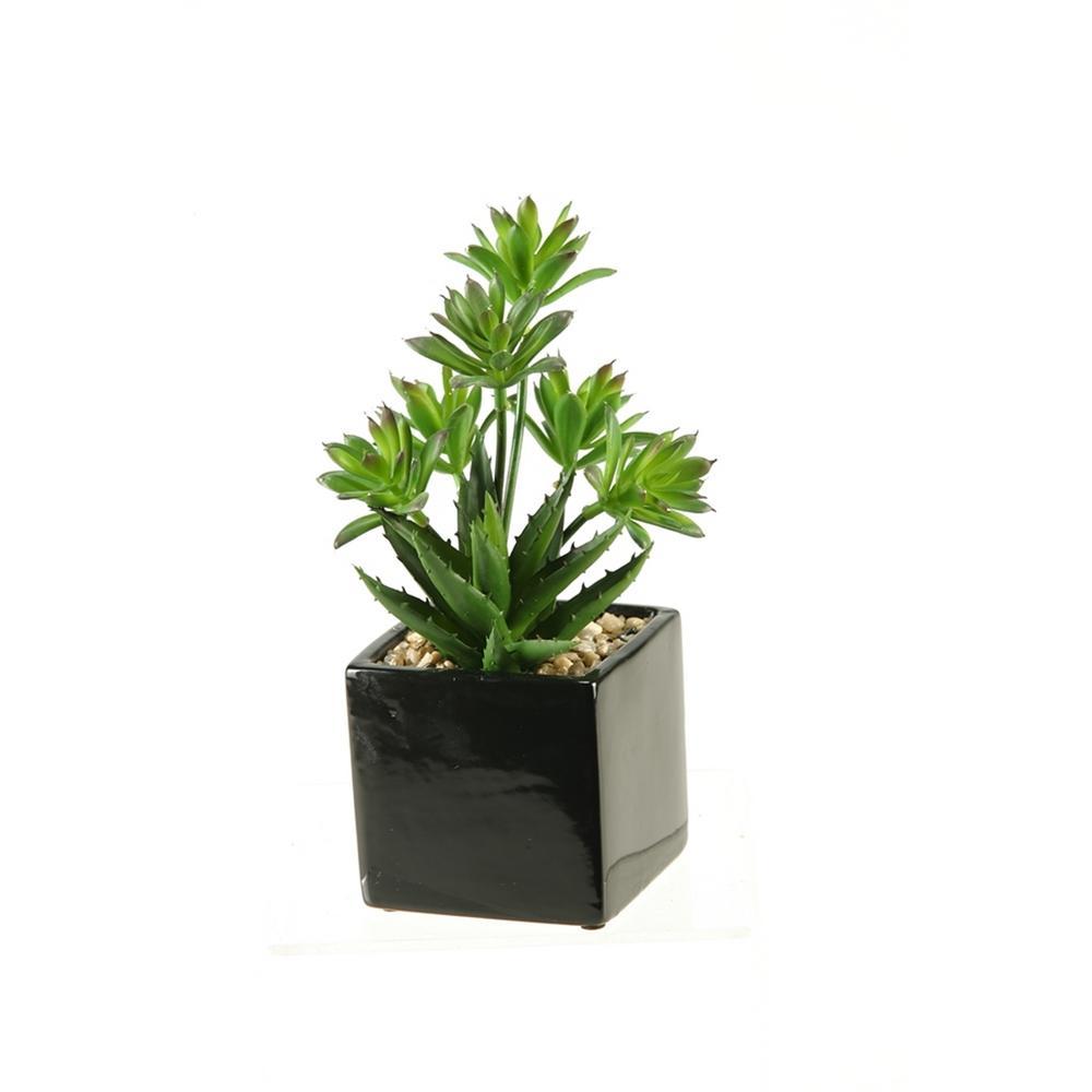 Indoor Mini Dracaena and Aloe in Square Ceramic Planter