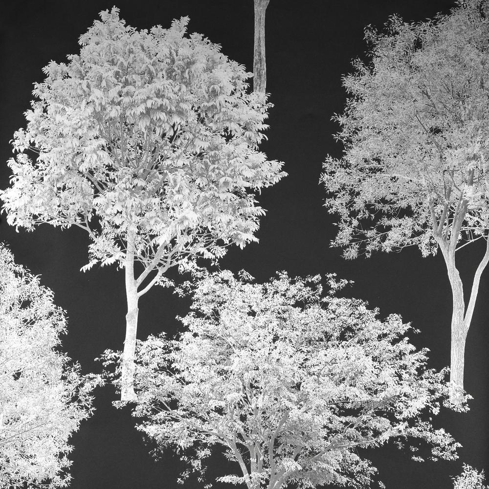 Tree Tops Black Photographic Tree Wallpaper Sample