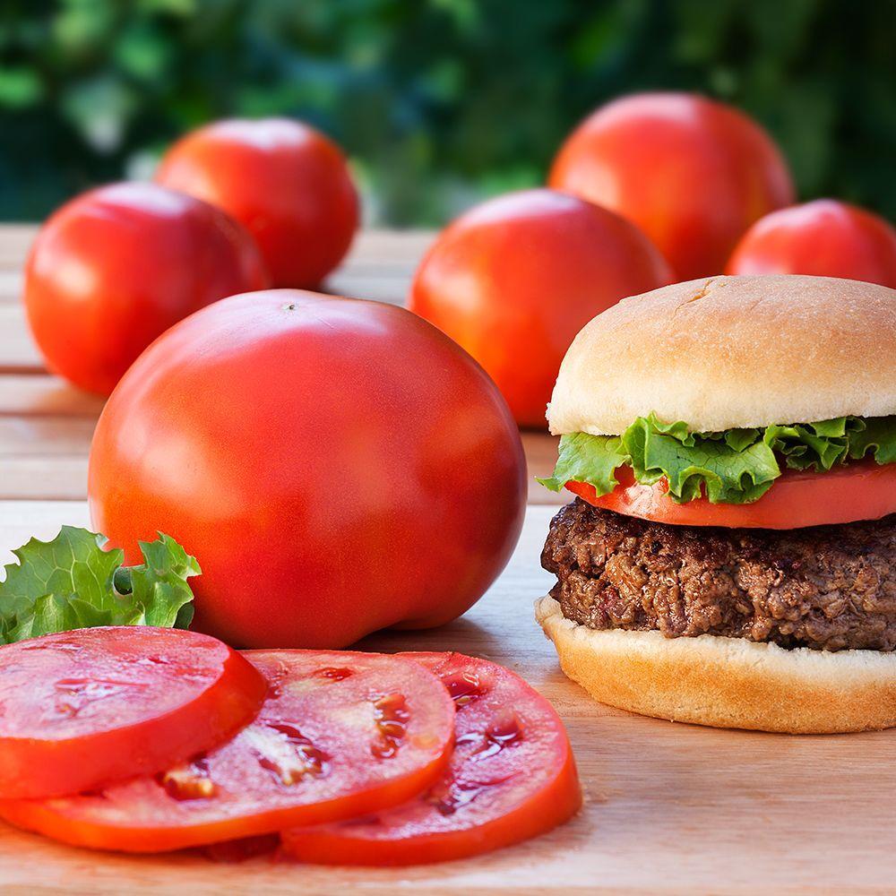 Bonnie Plants 4.5 in. 19.3 oz. Tomato-Biltmore