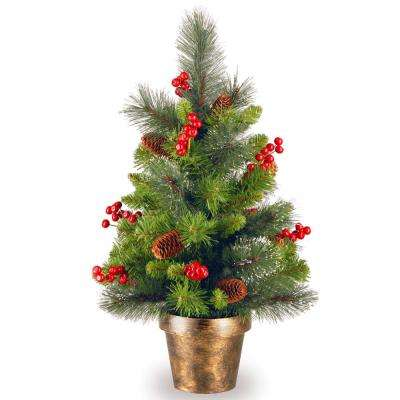 24 in. Crestwood Spruce Tree