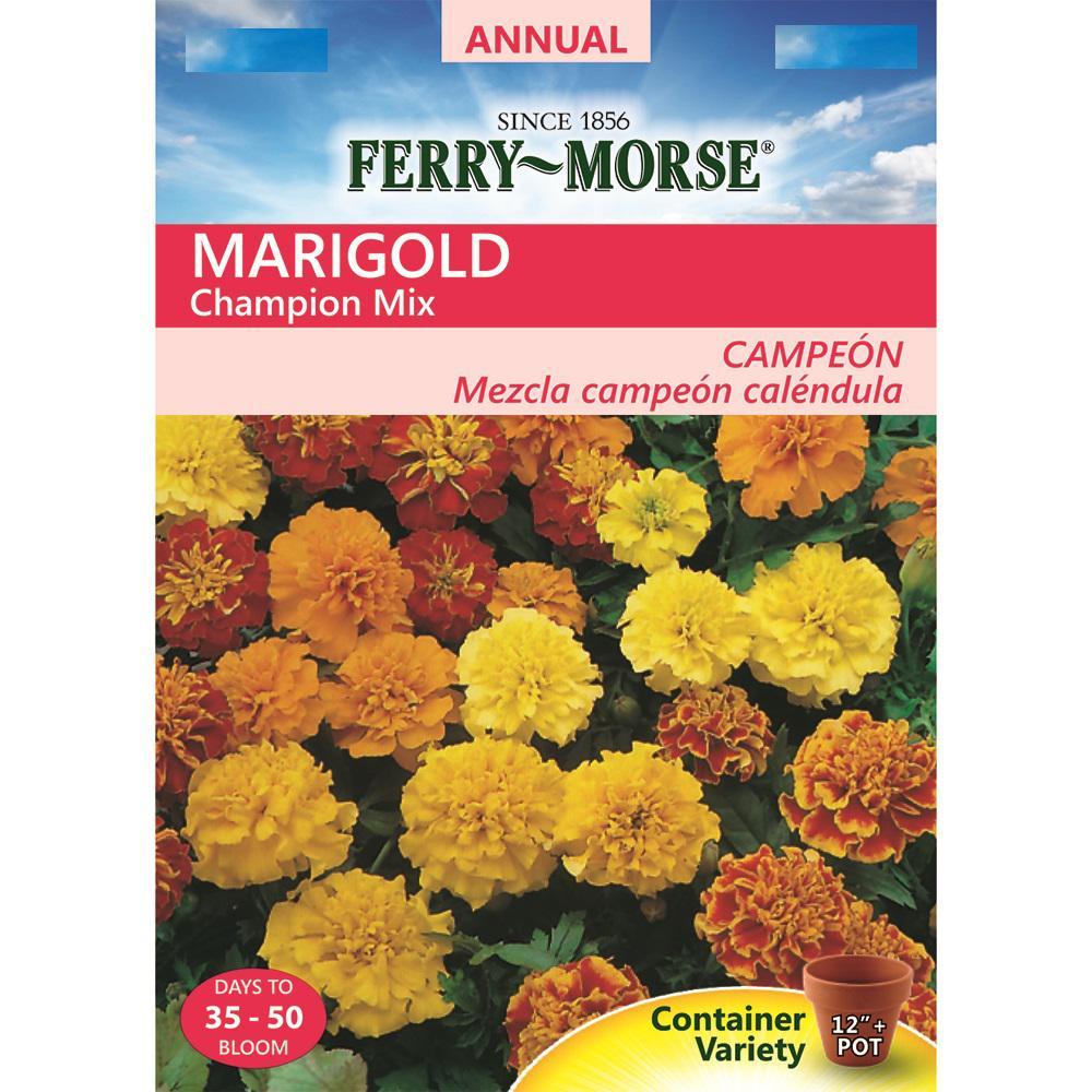 Marigold Champion Mix Seed