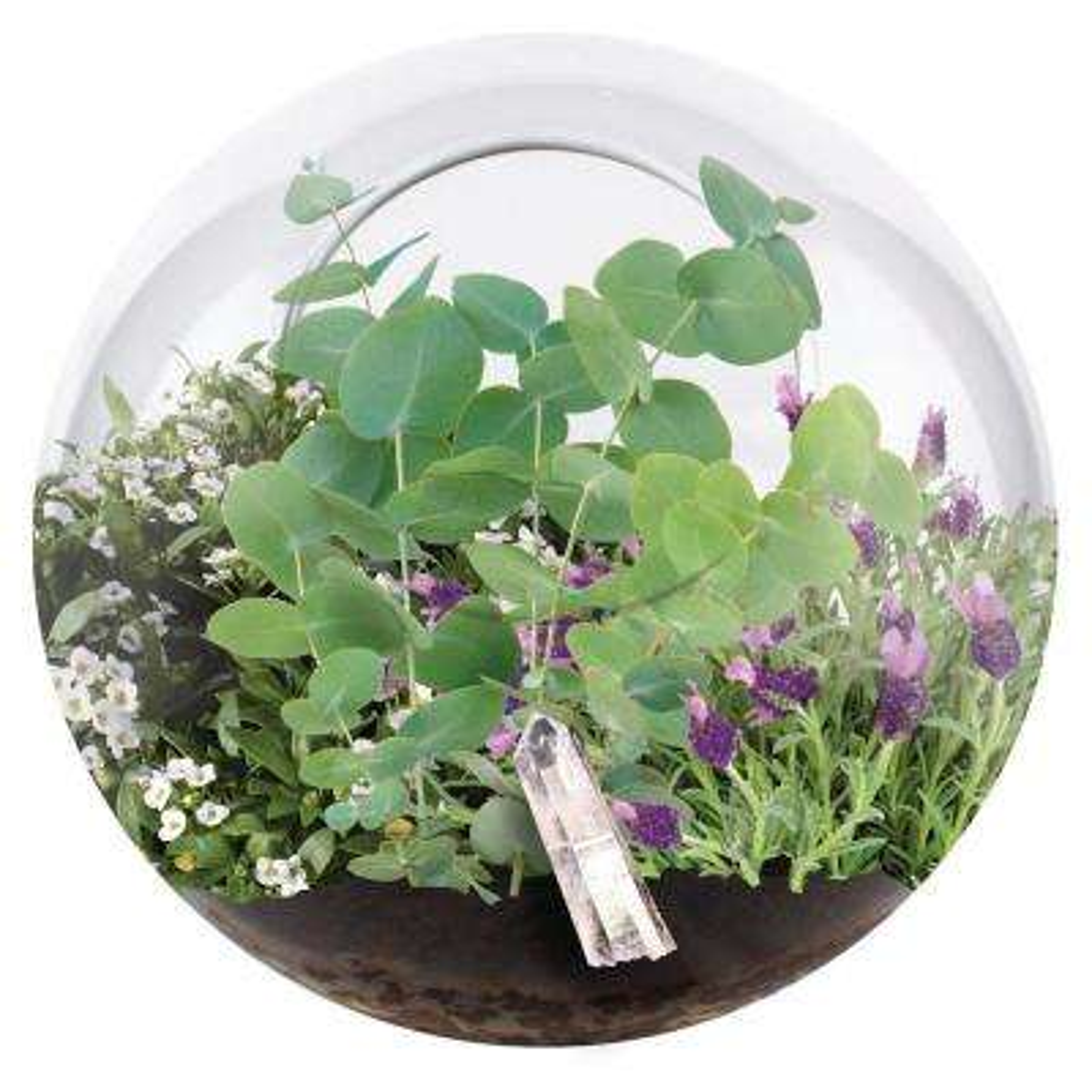 Classic Glass Clear Glass Crystal Indoor Garden Terrarium Indoor Garden Seed Starter Kit
