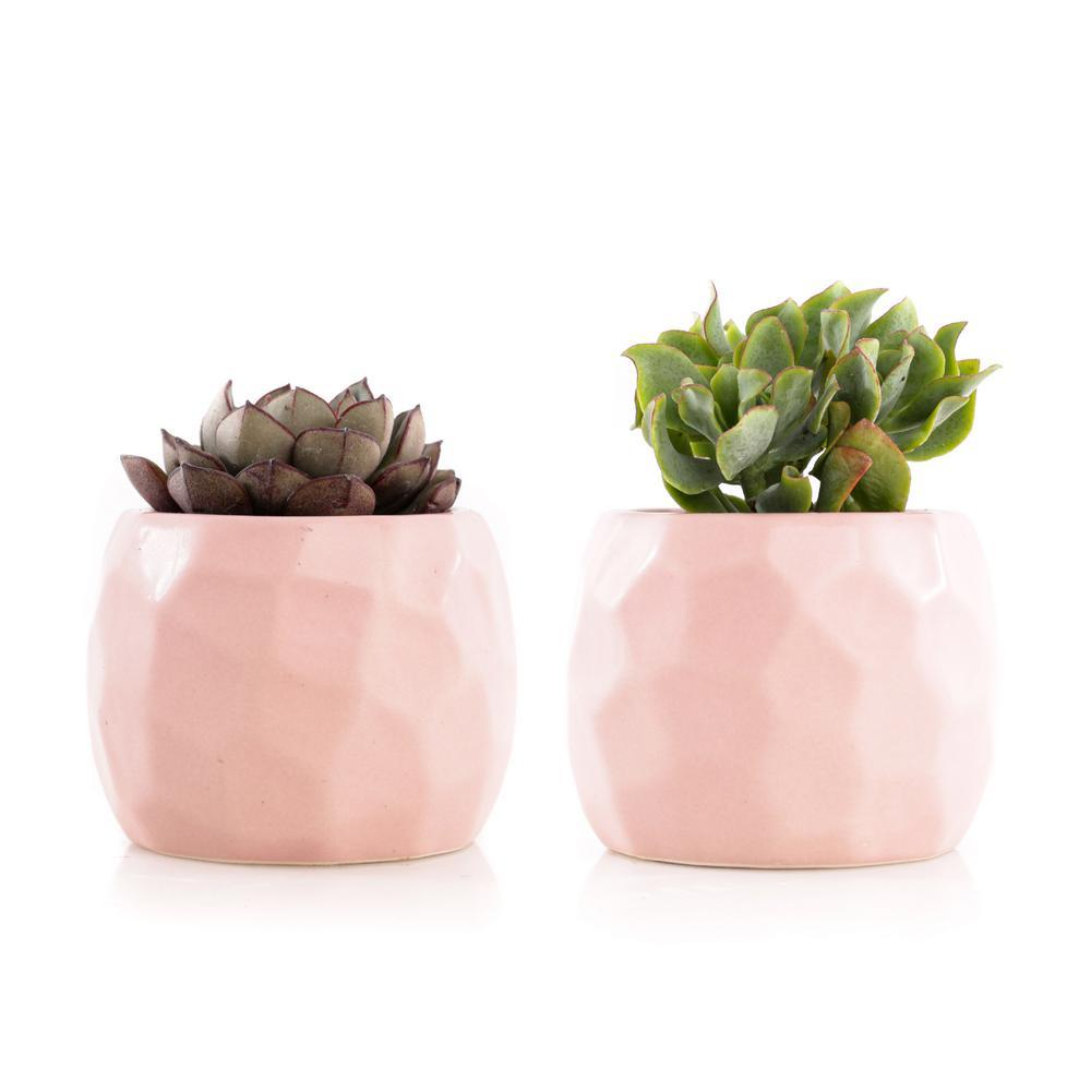 2.5 in. Assorted Succulent Set in Pink Geometric Pot (2-Pack)