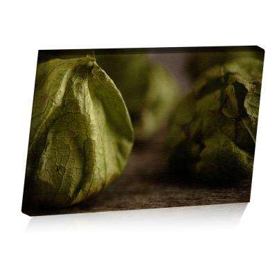 24 in. x 16 in. Rustic Tomatillos Printed Canvas