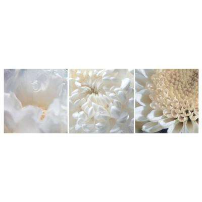 "Nexxt 12 in. x 12 in. ""Lily, Rose, Daisy"" Floral 3-Panel Canvas Wall Art Set"
