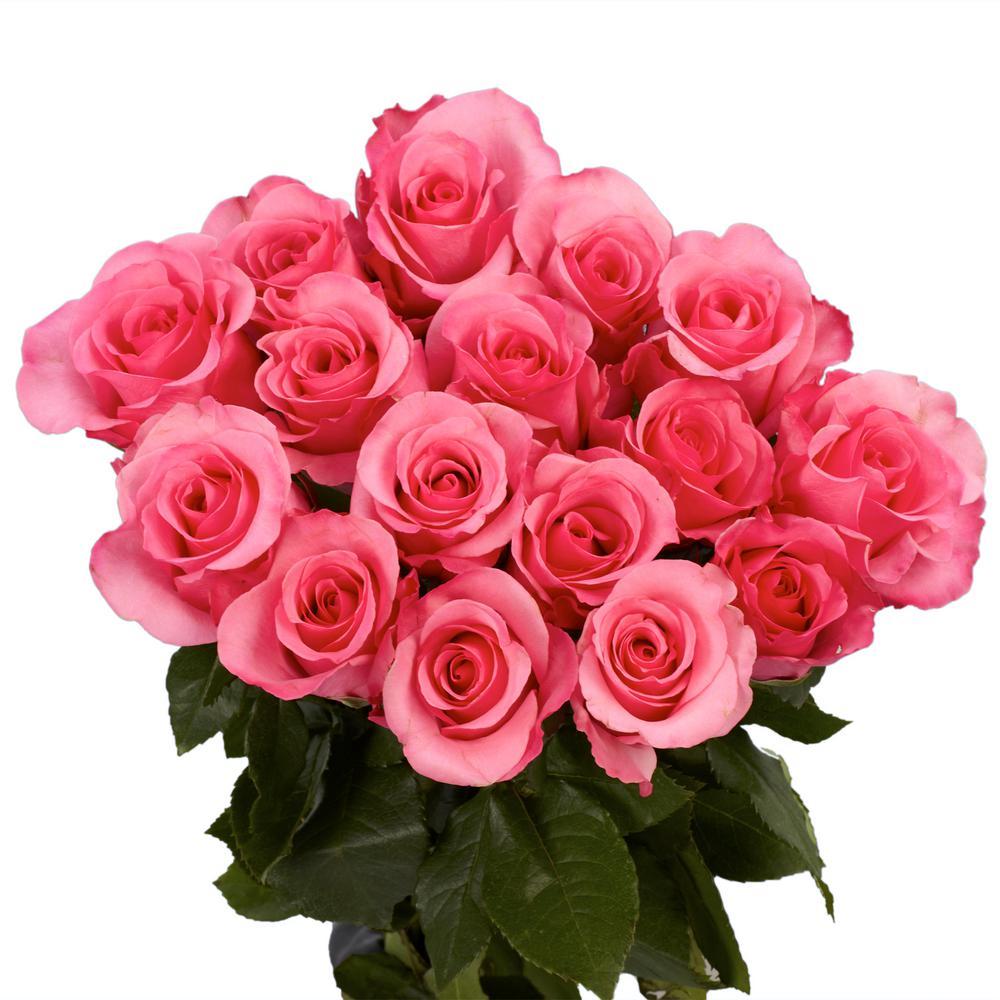 Globalrose dozen pink roses vars 1 dozen pink roses the home depot dozen hot pink roses mightylinksfo