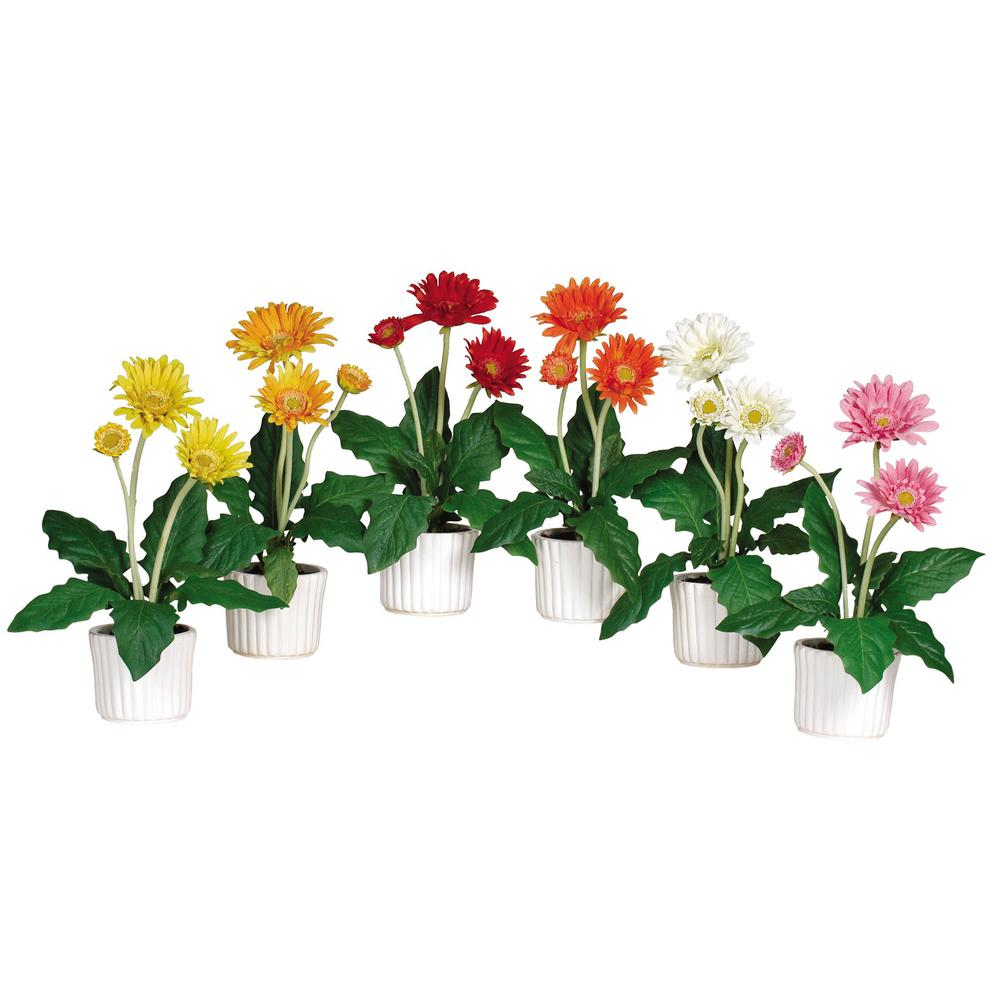 12 in. Gerber Daisy with White Vase (Set of 6)
