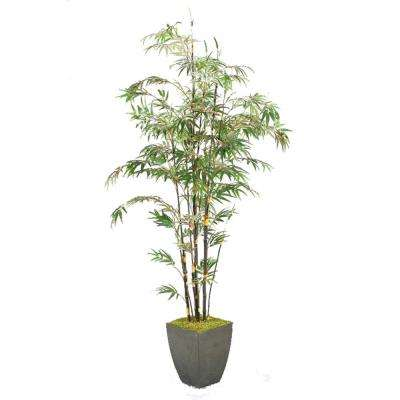 Indoor 8 ft. Bamboo Tree in Square Metal Planter