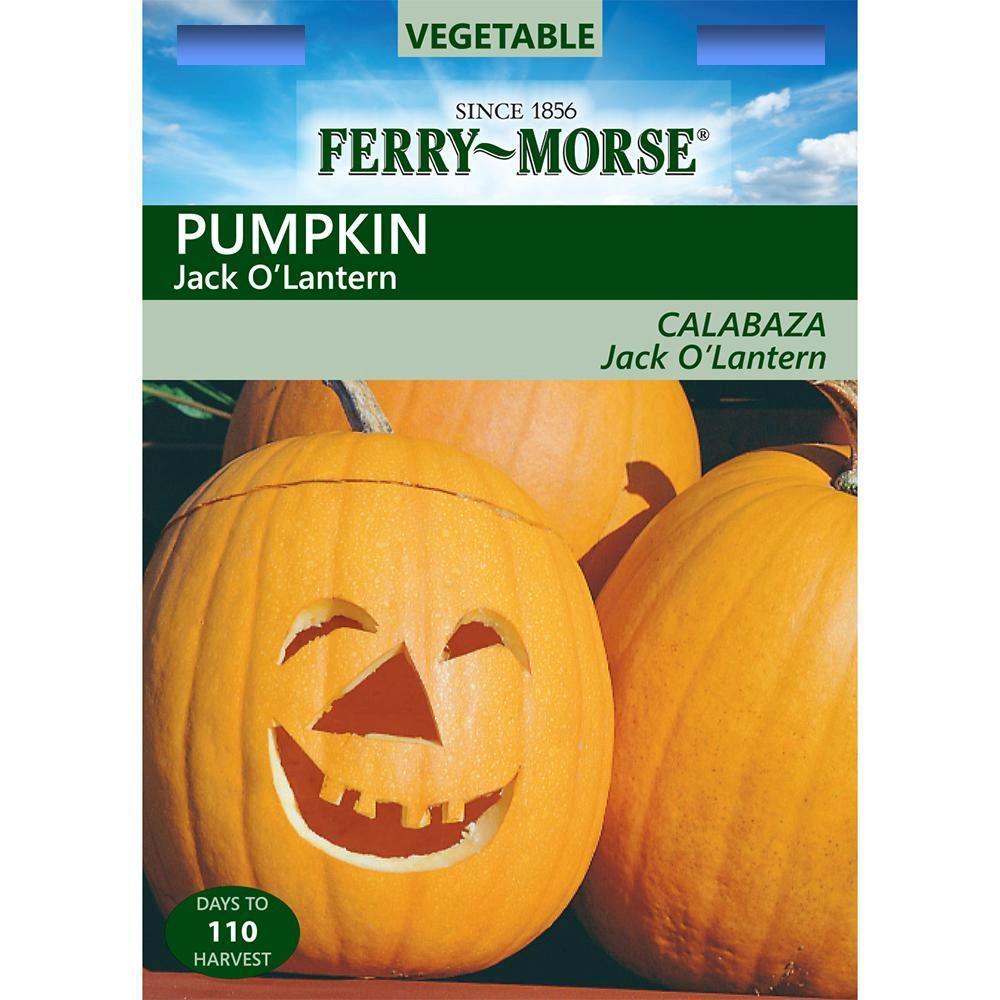 Pumpkin Jack O' Lantern Seed