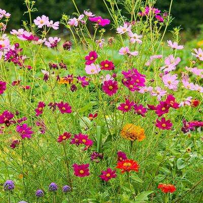 Monarch Butterfly Garden Mixture, Multiple Varieteies with Many Colors (300 Seed Packet)