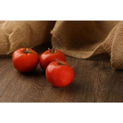 4.25 in. Grande Proven Selections Heirloom Beefsteak Tomato Live Plant Vegetable (Pack of 4)
