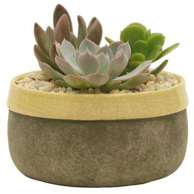 Cool Moon Succulent Garden in 6 in. Cement Duo Sunshine Ceramic