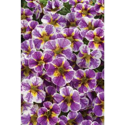 4.25 in. Purple and Yellow Flowers Grande Superbells Holy Smokes (Calibrachoa) Live Plant (4-Pack)