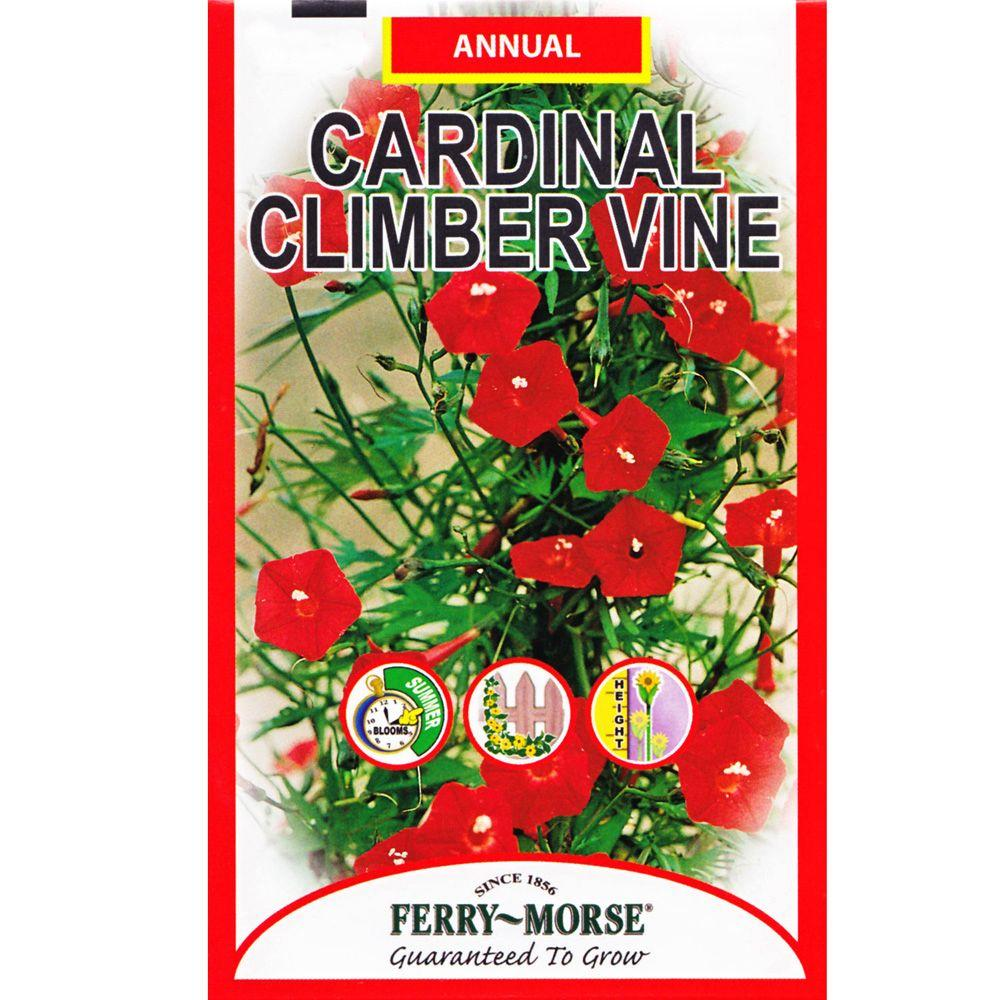 Ferry-Morse Climber Vine Cardinal Seed