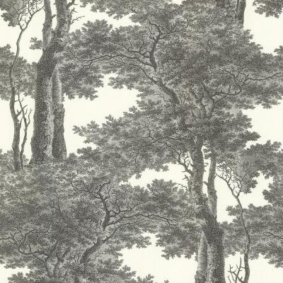 8 in. x 10 in. Scout Black Forest Wallpaper Sample