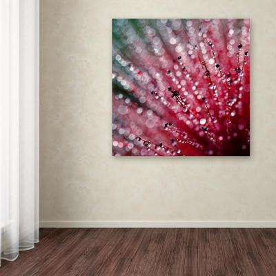 "14 in. x 14 in. ""Pink Melody"" by Beata Czyzowska Young Printed Canvas Wall Art"