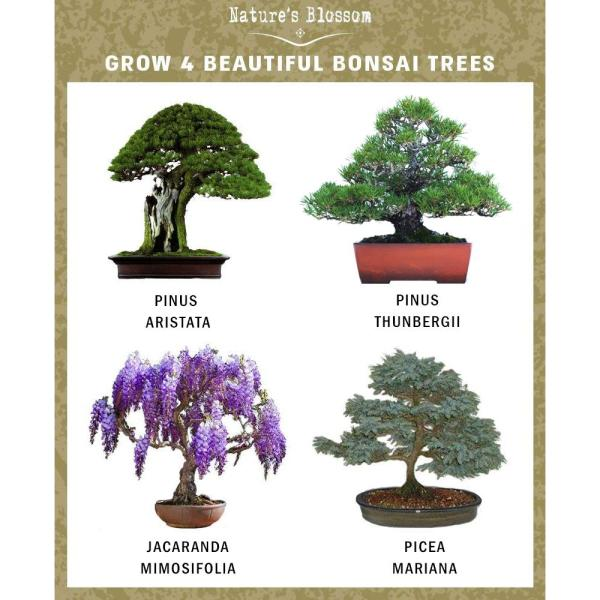 Nature S Blossom Bonsai Growing Kit Grow 4 Types Of Miniature Trees Set With Seeds Soil Planting Pots Labels And Growing Guide X00108aayd The Home Depot