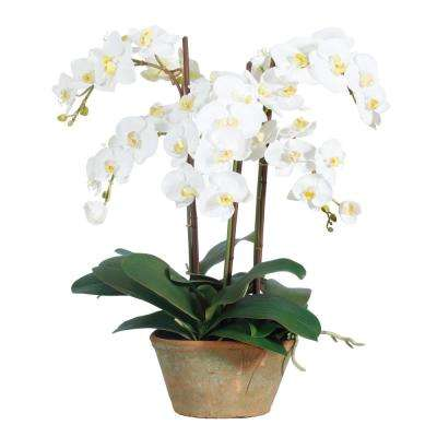 24 in. Phaleanopsis Potted Planter