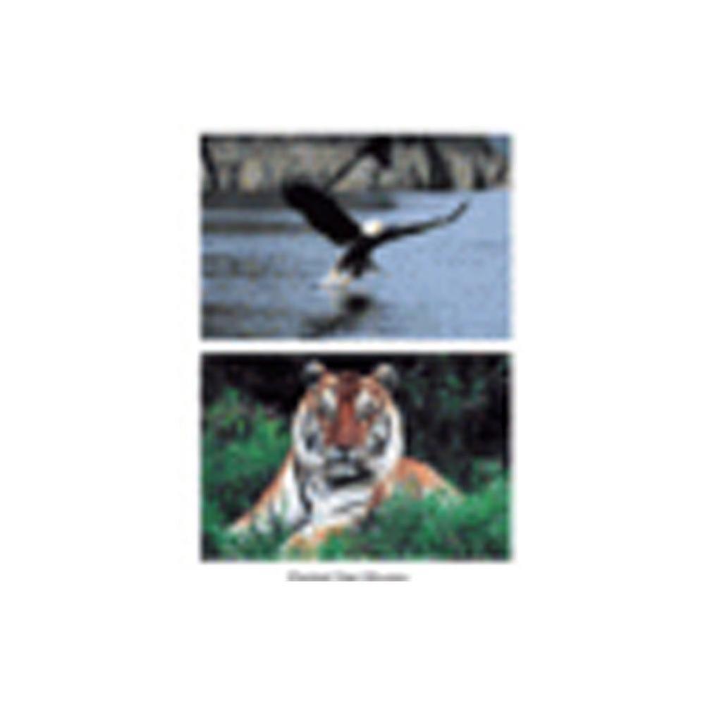 Wild Animal Poster (Set of 10)