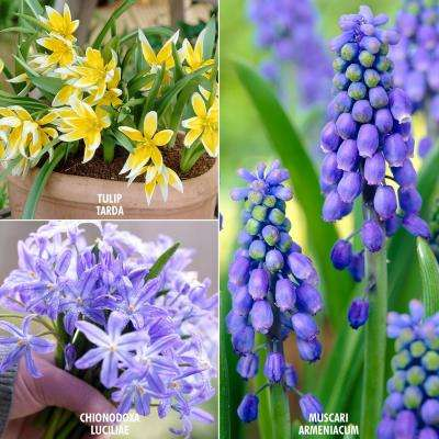 Spring 6 none listed flower bulbs garden plants flowers early spring bulb garden set of 75 mightylinksfo